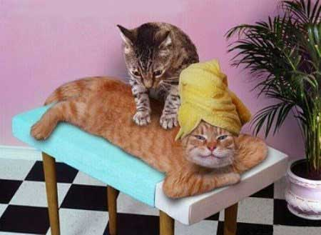 Cat_massage
