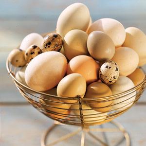 Cookbook-eggs-1-lg